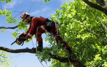 find trusted rated Hammersmith Fulham tree surgeons