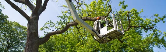 Hammersmith Fulham tree surgery services