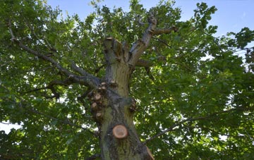 what is Hammersmith Fulham tree surgery?